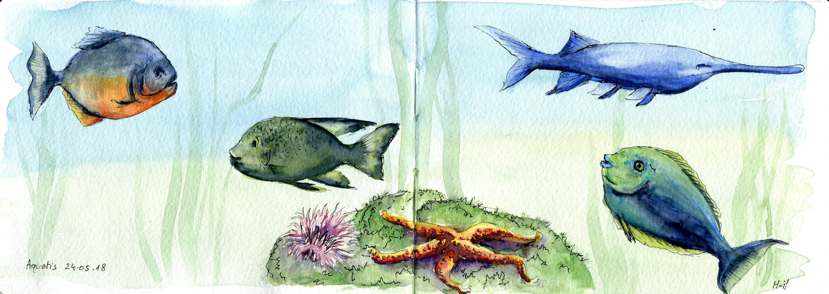 Aquatis 4 poissons