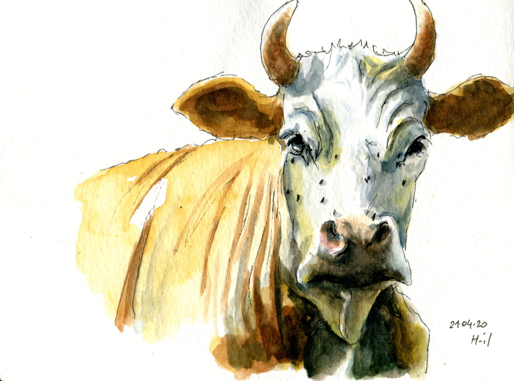 Vache 2033