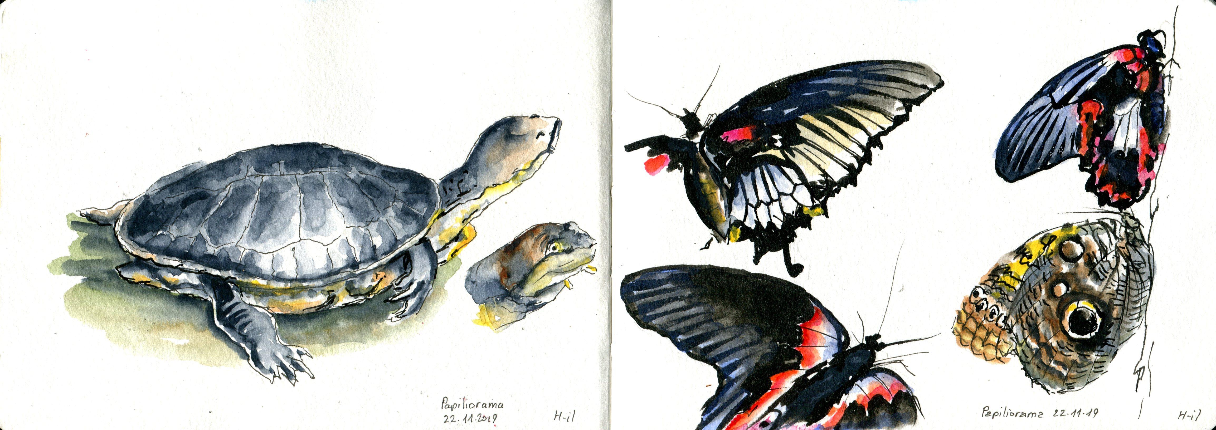 Papiliorama021