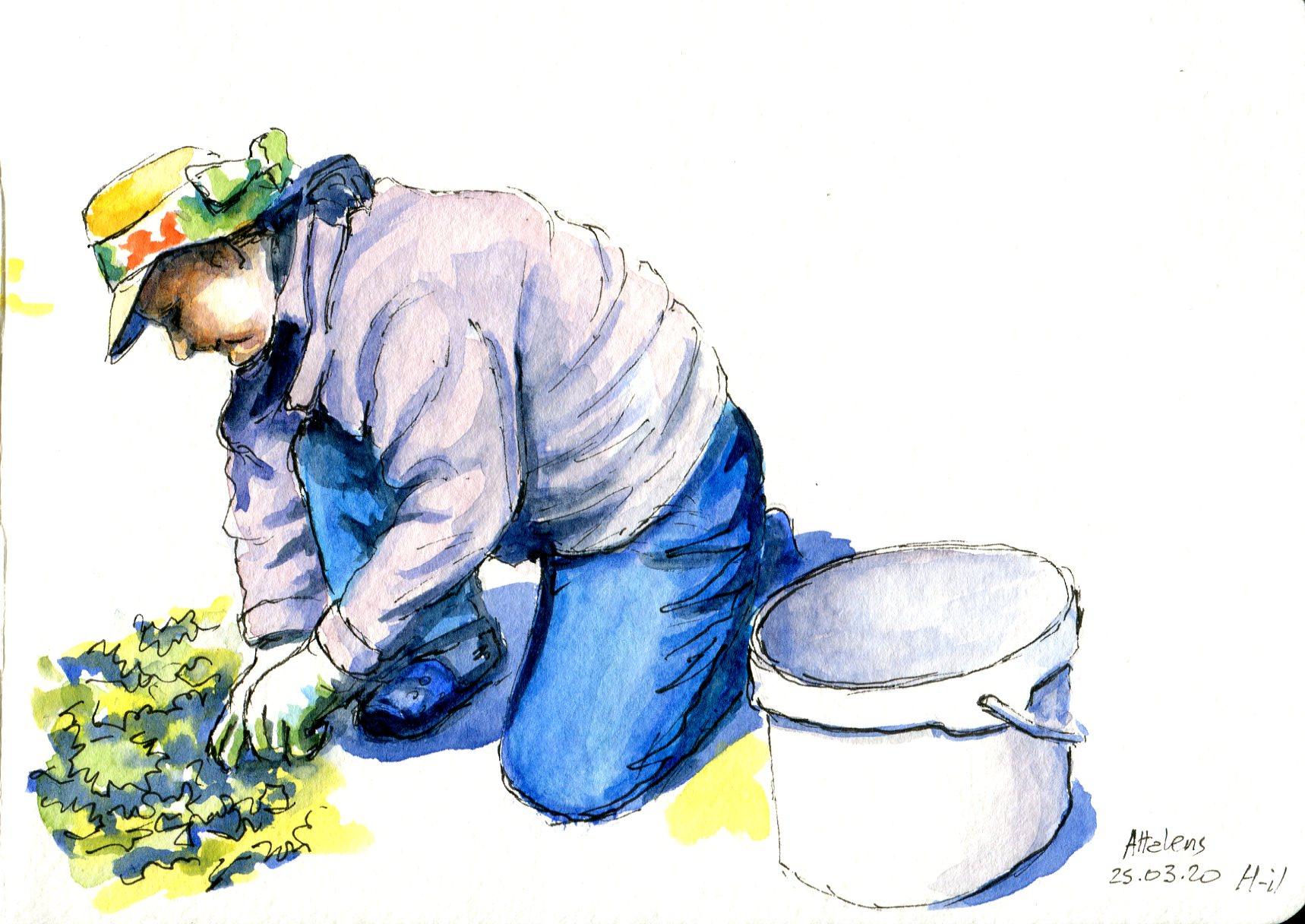 Jardinage157