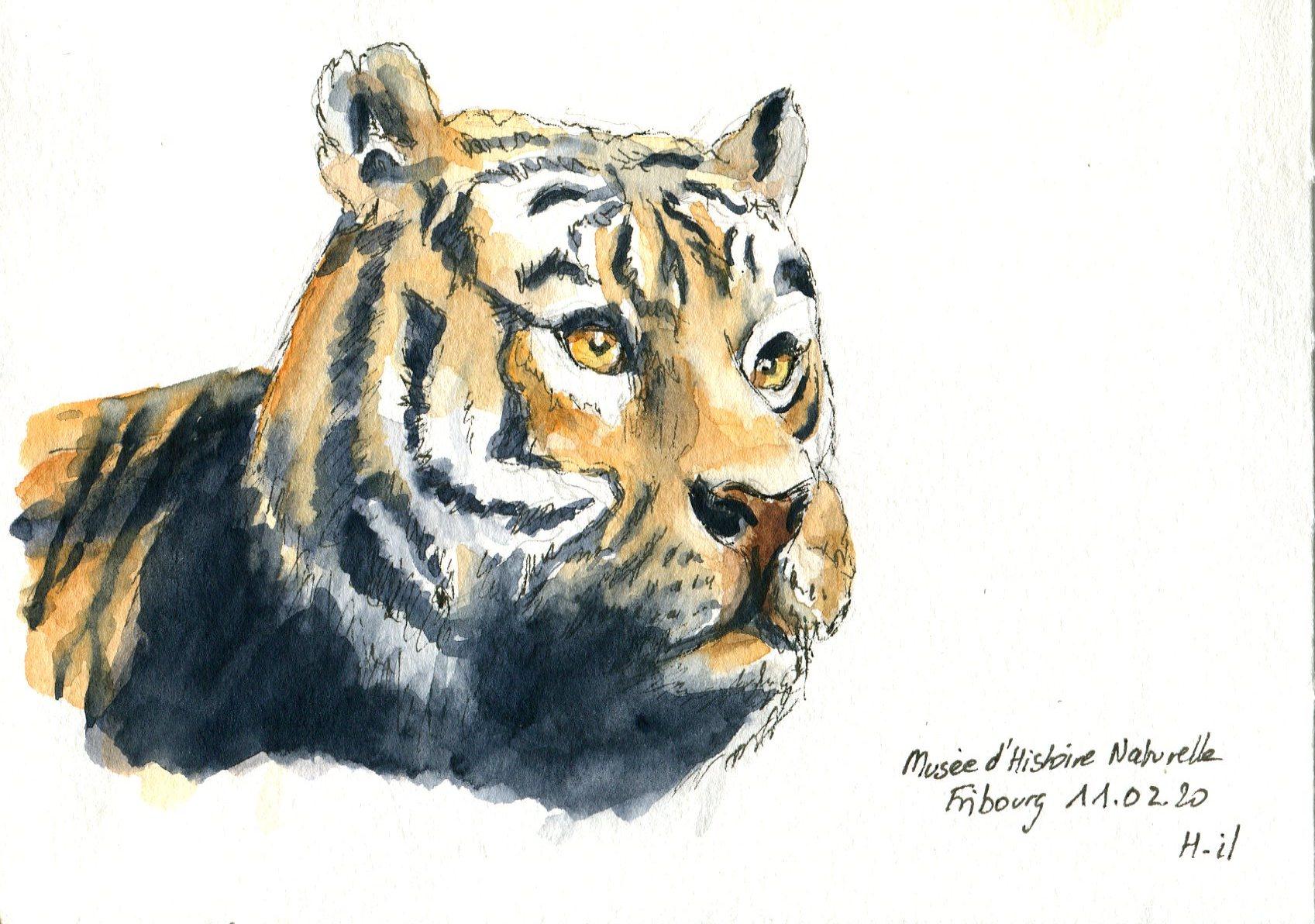 Tigre100