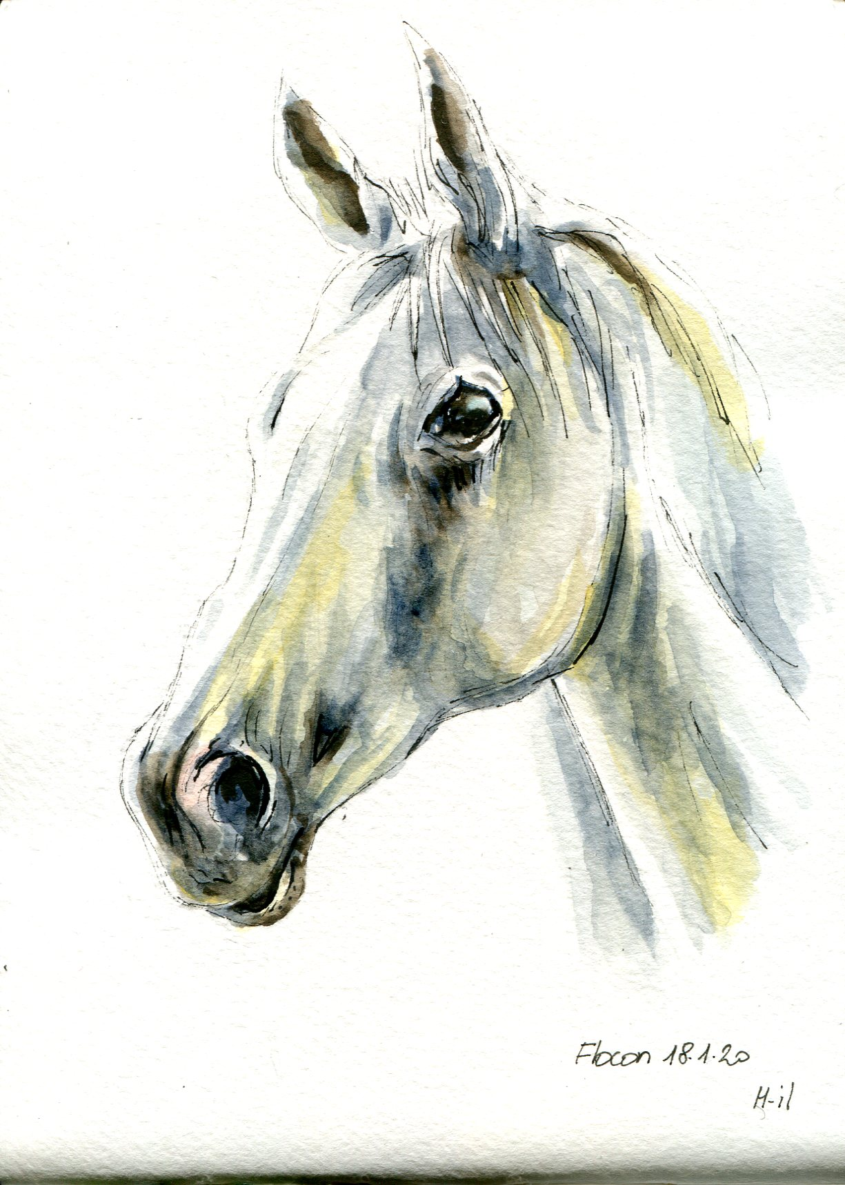 Cheval blanc078
