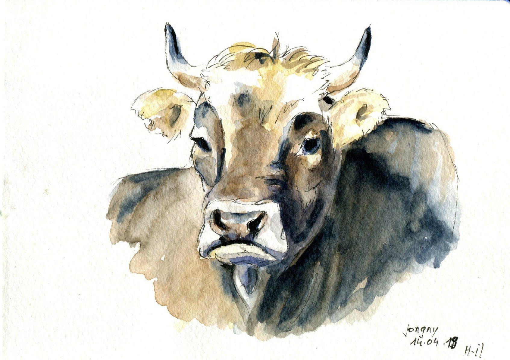 vache Jongny019