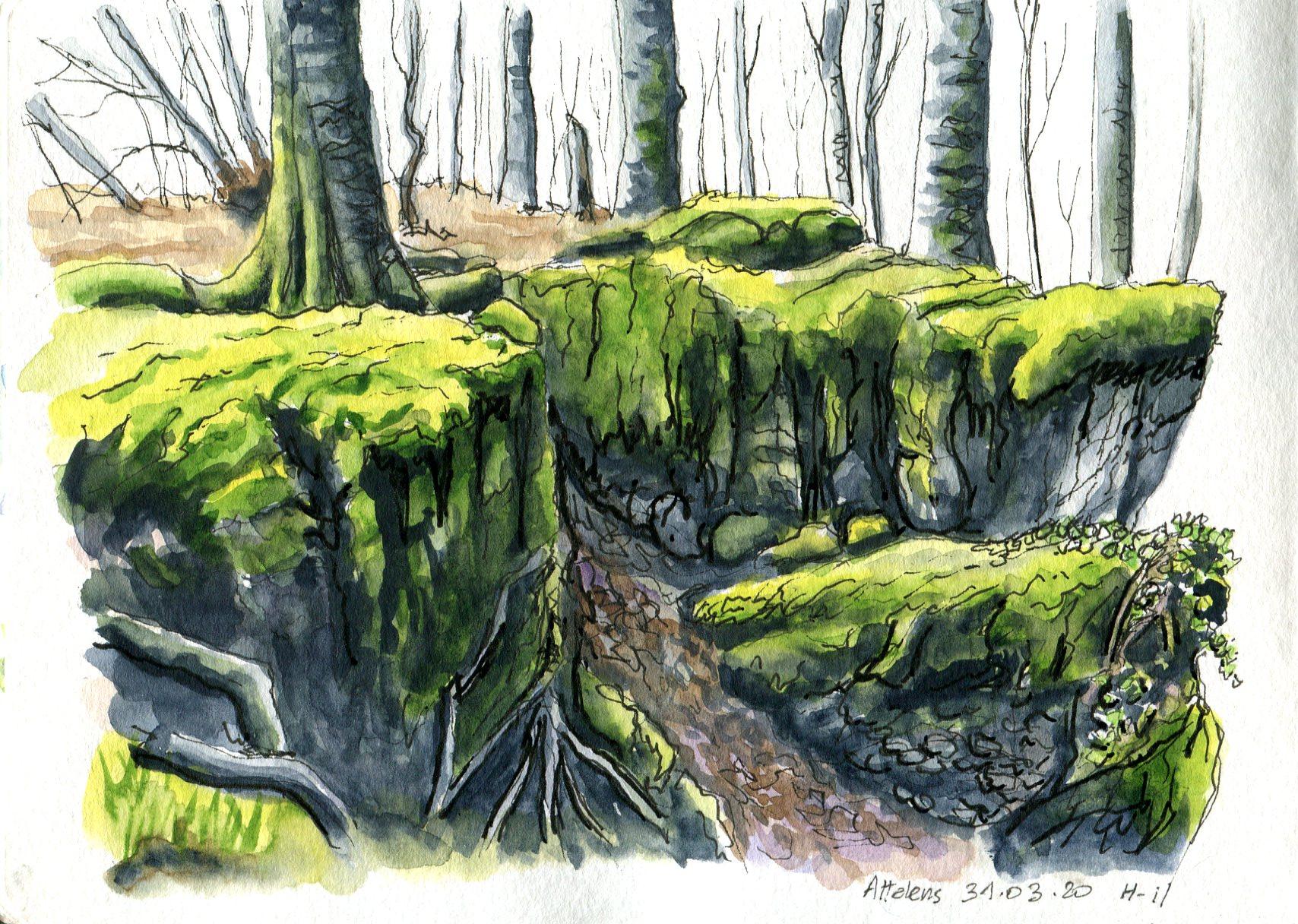 Forêt_Raffort006
