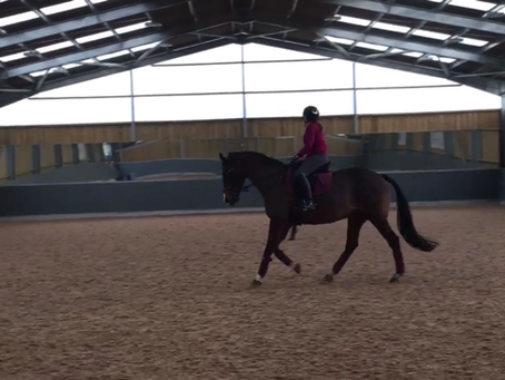 What does it take to train a riding school pony/horse?