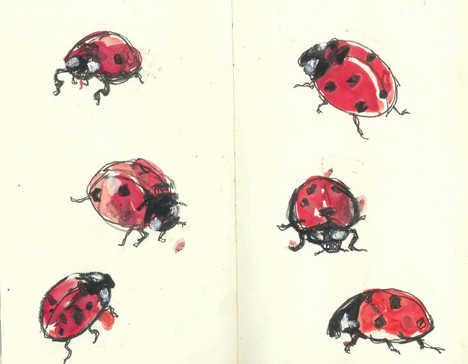 observational drawing - ladybirds