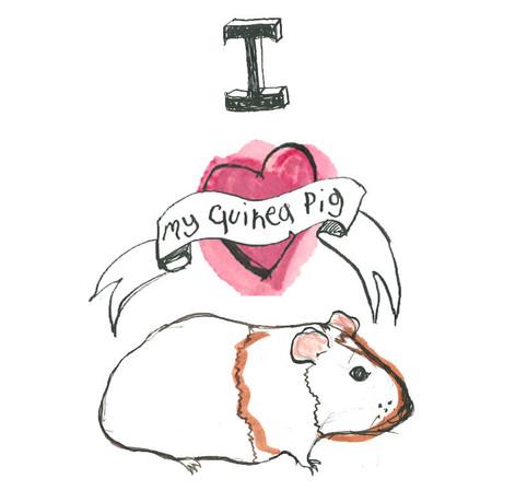 guinea pig love - card development