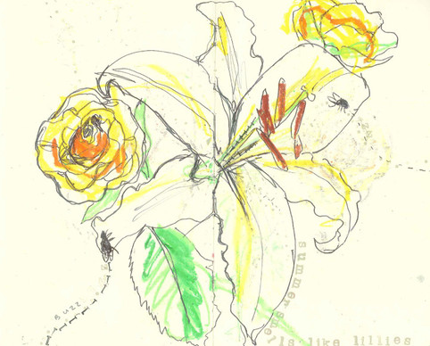 observational drawing - Lily