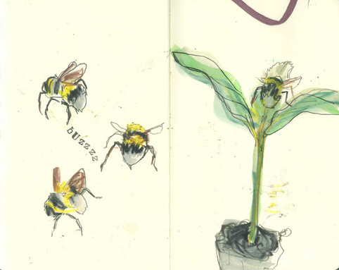 observational drawing - bees