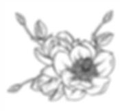 magnolia1.png