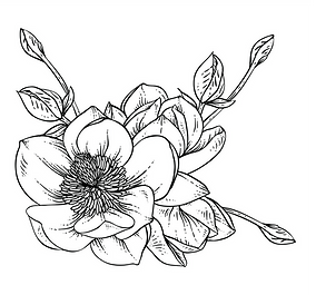 magnolia1_edited.png