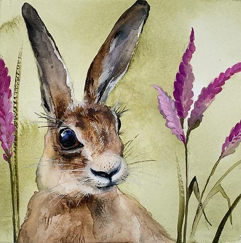 Heather Hare