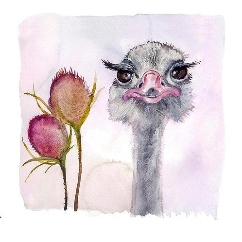 Audrey Ostrich