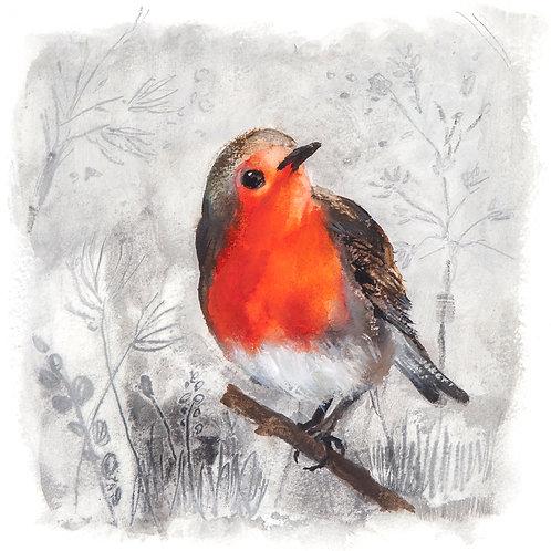 Robin on white