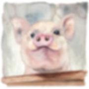 Mr Pig+cc Lr.jpg