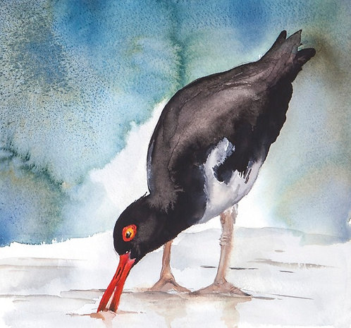 Original watercolour painting of an Oyster catcher