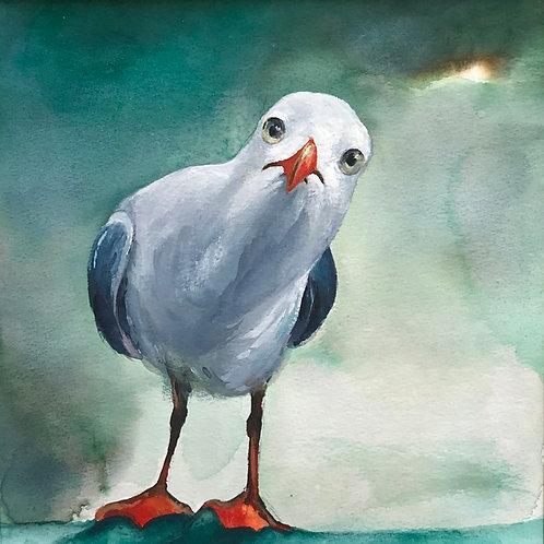 Inquizative seagull