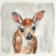baby deer Lr.jpg
