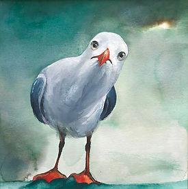 inquizative seagull.jpg