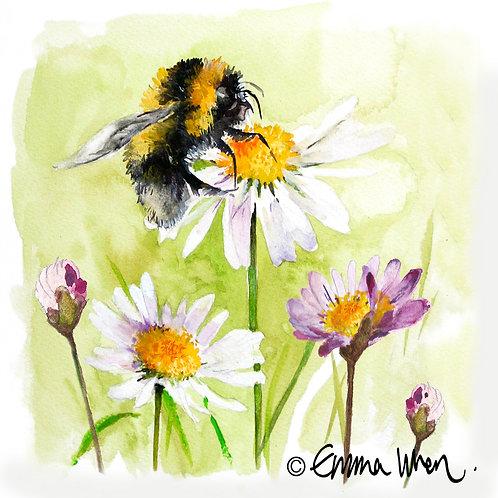 Bee and purple daisy