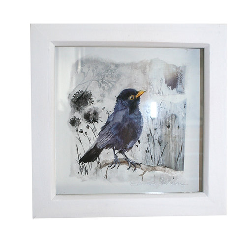 Framed Blackbird