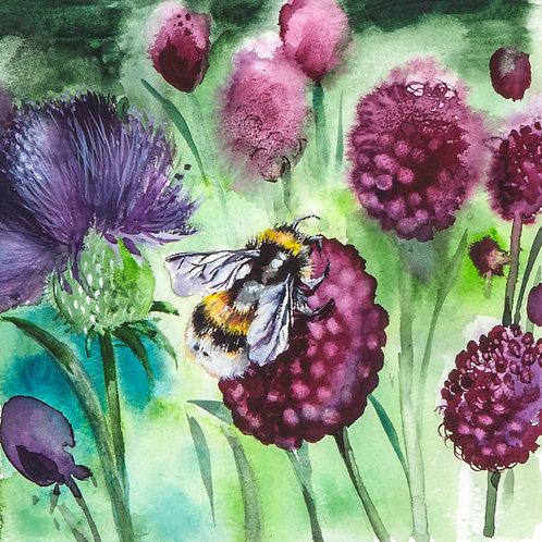 Bee amongst the Alliums