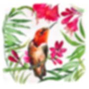 Orange Hummingbird+ccLR.jpg