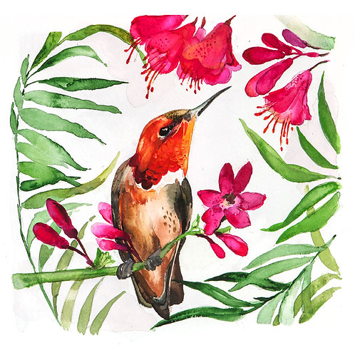 Original orange Hummingbird watercolour painting.