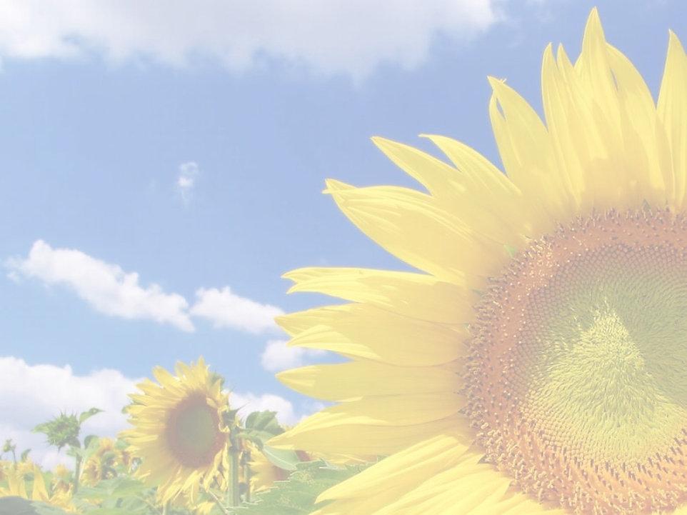 sunflower_edited_edited.jpg