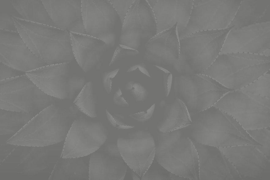 Succulent_edited_edited_edited_edited.jp