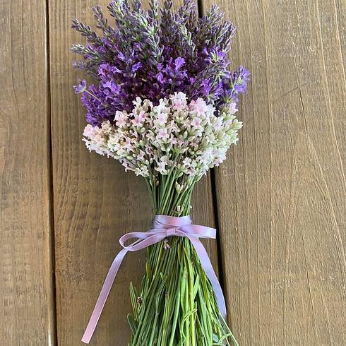 Lavender U-Pick Wed, Jun 2 @ 10am