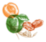 STONE FRUIT.png