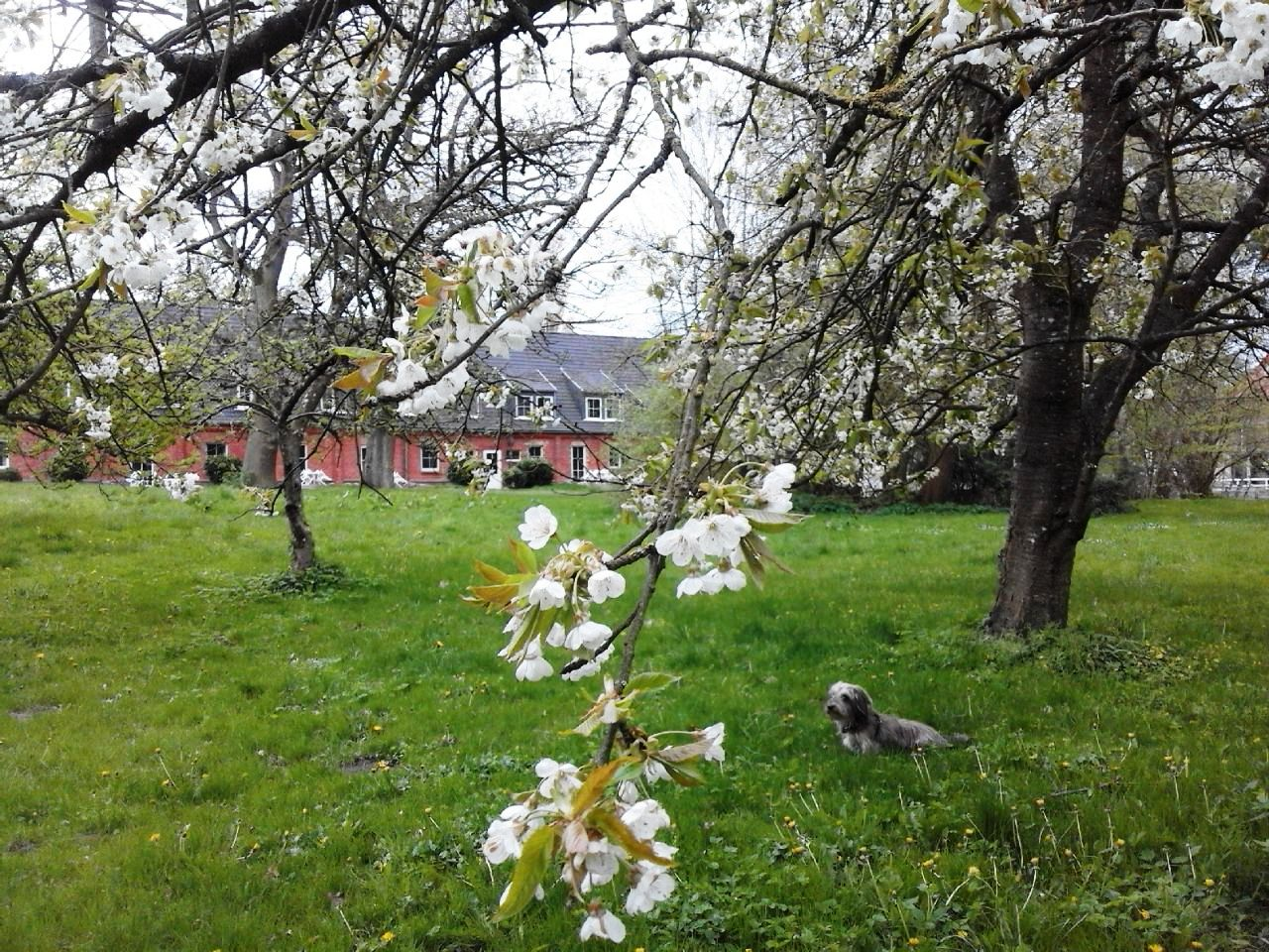 Frühling Gästehaus