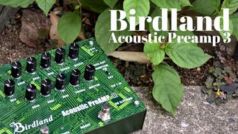 Birdland Acoustic Preamp 3 デビュー!!