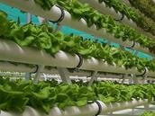 hydroponics_pic.png