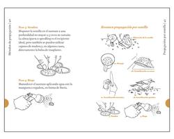 Libro | Flora nativa, propagación de esp