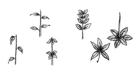 Crecimiento hojas