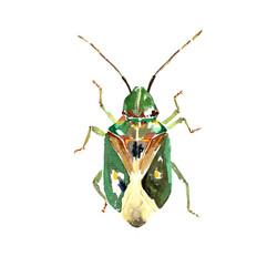 Insectos del sur de Chile