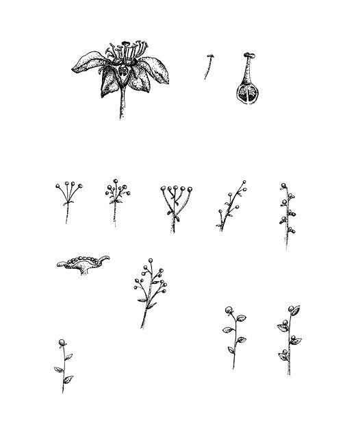 Flor y tipos floracion