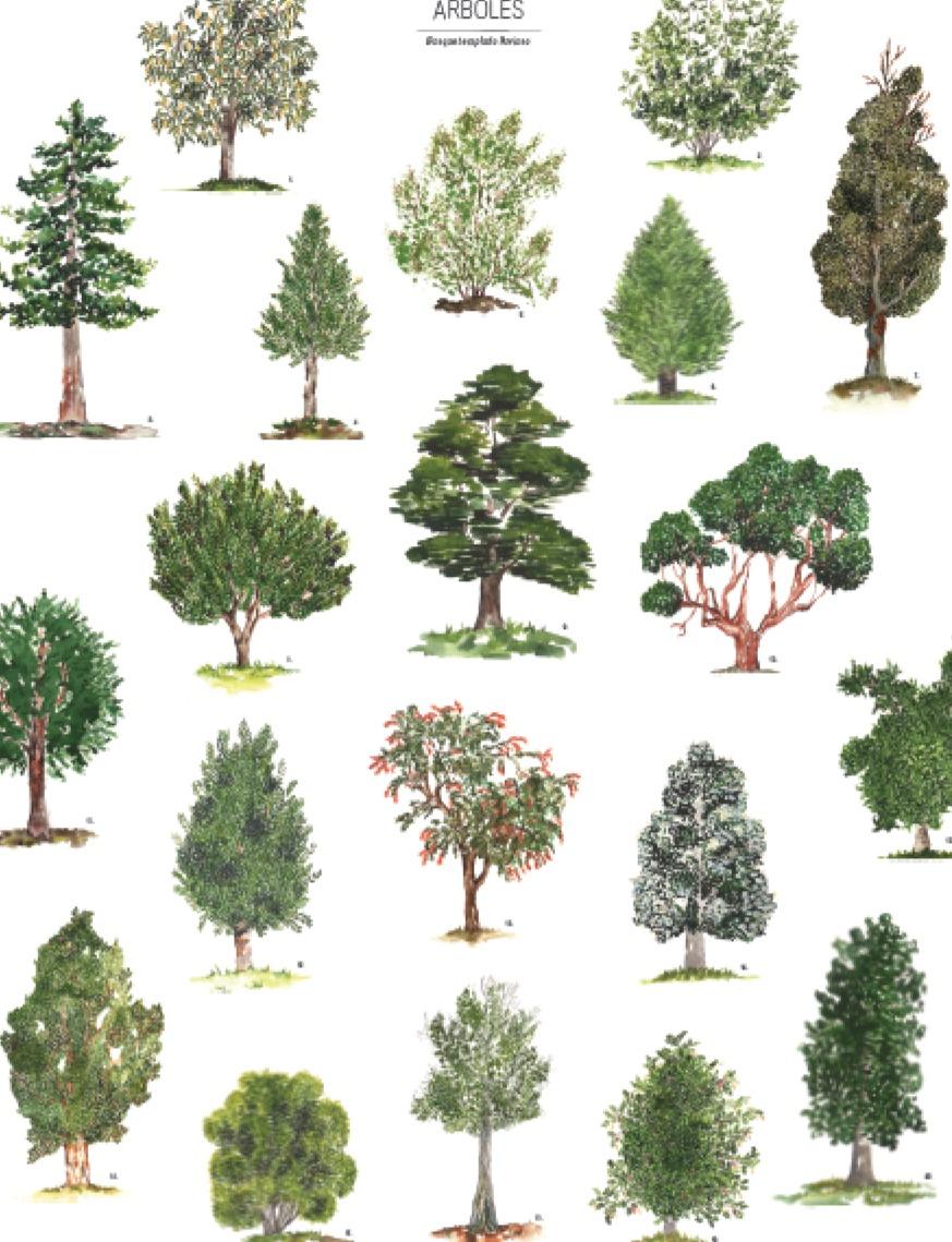 Afiches bosque