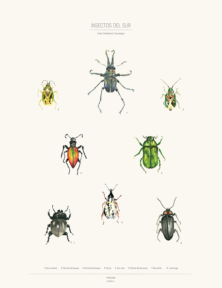 poster insectos2-01.png