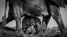 Wildlife through the lens - a talk by  Tom Way