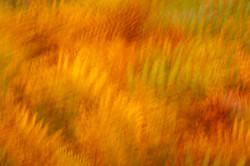 Autumn Bracken Colours by John Draper
