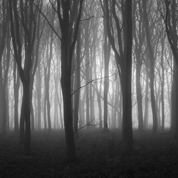 The Deep Dark Woods by John Draper