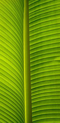 seams of green by steve lee