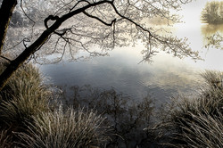 winter at Petworth Park by steve lee