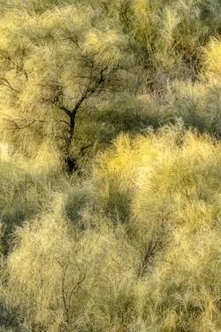 ETHEREAL FOREST by Eddie Bradley 1