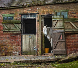RUSTIC STABLES