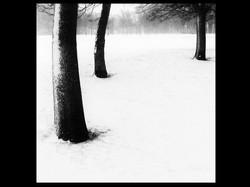 THREE TREES by David Silk 2