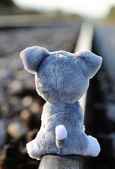 Teddy Bear Waiting Lost Friend